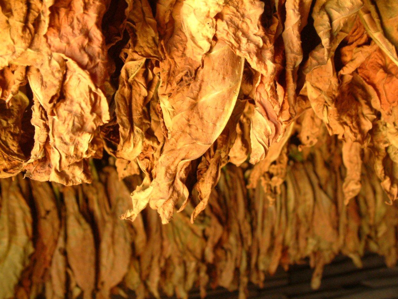 Indústria do Tabaco